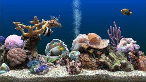SereneScreen Marine Aquarium 3.3.6381 Crack